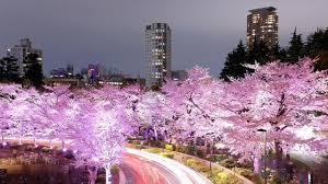 Bunga Sakura 5 Tempat Terbaik Untuk Nikmati Bunga Sakura Di Jepang