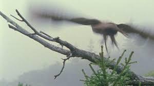 Resultado de imagen para niebla y lechuza