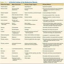 Endocrine Gland Endocrine System Nursing Tips Anatomy