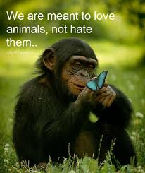 Love Animals Quotes Simple Values Animal Love Quotes For Spiritually Minded People
