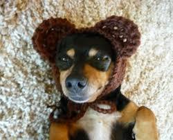 Crochet Dog Hat Pattern Beauteous Bear Dog Hat Crochet Pattern Crochet Dog Hat Pattern Crochet Etsy