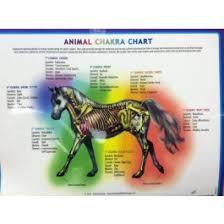 Animal Chakra Chart Animal Chakra Chart Horse Charts Books Charts Videos