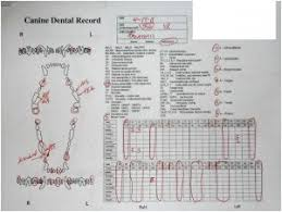 43 Complete Canine Dental Assessment Chart