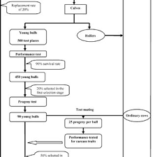 Flow Chart Showing The Breeding Plan Simulated For The