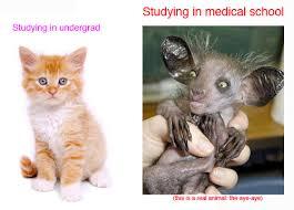 Hi there! I'm hoping to start medical school next... | Aspiring ... via Relatably.com