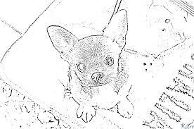 Chihuahua Kleurplaten Kidre