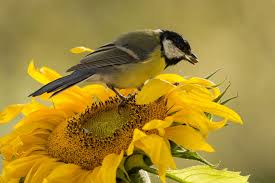 Top 10 Plants to Attract Songbirds