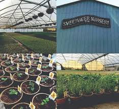 the loveday brown family started the small plant nursery in point richmond in 1977 and then moved