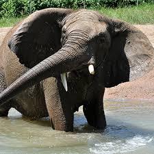 animals in zoo pictures. Brilliant Animals African Elephant To Animals In Zoo Pictures P