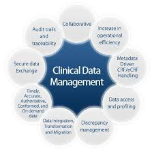 job description data manager job description the clinical data manager will be responsible for