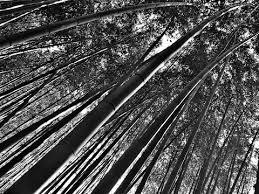京都編④夜間が楽しい伏見稲荷大社竹林の道ホテル紹介