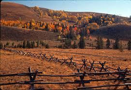 file fall cattle fences jpg help for shepherds file fall cattle fences jpg