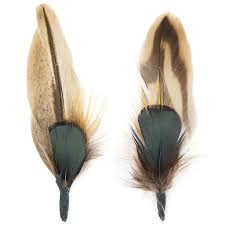 Image result for duck feather images