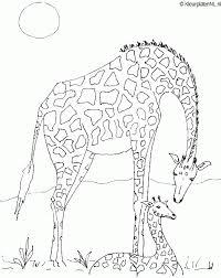 Giraffe Kleurplaat Kleurplaten 605 Kleurplaat Kleurennet