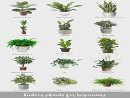 office plants no light. Indoor Plants For Beginners (Katrina Chambers) | Plants, Office No Light