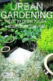 small veg garden ideas looking for some small vegetable garden ideas make the most of space small veg garden ideas