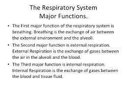 respiratory system langston  respiratory system by jacob c jeremiah l scott s 2