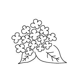紫陽花のボールペンイラストのかわいい書き方 Create Club