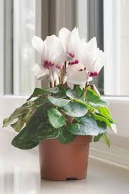 winter container plants nine of the