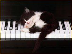 cute kittens sleeping on pianos. Unique Cute Ecco Un Vero Artista  Gattino Bianco E Nero Che Dorme Sul Pianoforte   Funny KittensKittens CutestCats  To Cute Kittens Sleeping On Pianos A