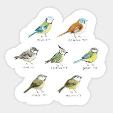 The Tit Family