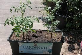 earthbox austin urban gardens page 2 garden