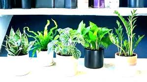 Best office plants no sunlight Sun Indoor Sunlight For Plants Related Post Best Indoor Office Plants For Online No Sunlight Plant That Indoor Sunlight For Plants Tall Dining Room Table Thelaunchlabco Indoor Sunlight For Plants Low Best Indoor Office Plants Light Small