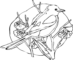 Small Picture Bird coloring pages Magpie coloring page Bird coloring sheets