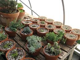 fairy garden plants 01 firy uk to use home depot fairy garden