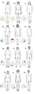 Female Body Types Chart Whats Your Body Type Somatotype Personality Type