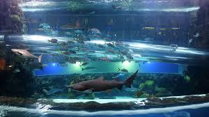underwater water slide. Shark Tank Waterslide Underwater Water Slide D