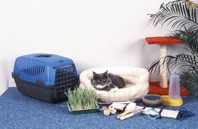 cat food water bed and litter tray locations and considerations