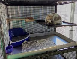 bottom cage is a two story critter nation converted to two separate cages by blocking the floor opening with a