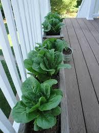 Small Picture Deck Vegetable Garden Garden Ideas