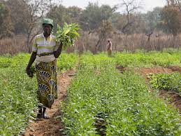 Mapping Underground Water Sources For Drip Irrigation Could