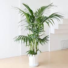 観葉 植物 名前 わからない