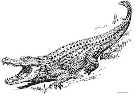 Small Picture Crocodile Crocodile Coloring Pages From ColoringPages Alligator
