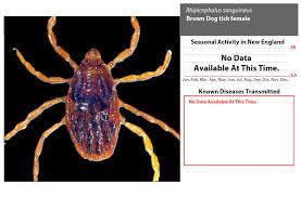 Canine Parasite Egg Identification Chart Tickencounter Resource Center Tick Identification