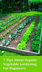Small Picture Best 25 Organic vegetables ideas on Pinterest Organic gardening