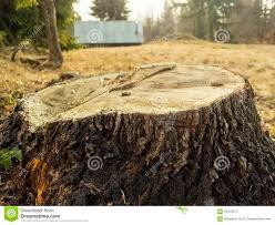 Effet De Bourdonnement Du0027un Tronc Du0027arbre Avec Le Fond De Maison Et De Forêt