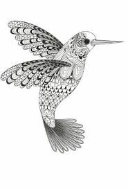 Small Picture 14 best hummingbirds images on Pinterest Poultry Draw and