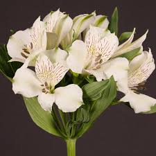 whole fresh cut white lilies alstroemeria polar alstroemeria flowers