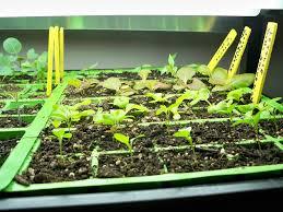 The Light Garden Seedlings In The Light Garden For More Information On The