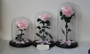 middle size long lasting preserved roses in glass dome 06