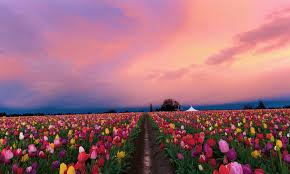 Flower Nature High Resolution Desktop ...