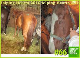 Camelot Auction Graduates- Before/After Photos | Rock and Racehorses: The  Blog