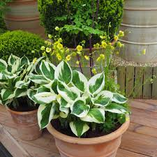 plants for summer pots as summer rolls in it s time to brighten outdoor living areas and there s no simpler way to create a welcoming alfresco sanctuary