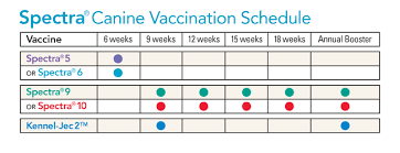 54 Logical Puppy Worming Schedule Chart