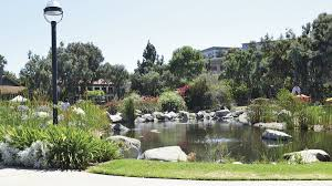 drought may claim webb park lake greenery