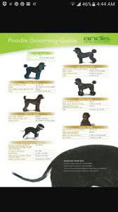 Andis Grooming Chart Poodle Grooming Guide Andis Blade Chart Poodle Grooming